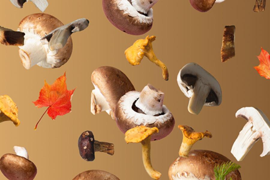 Grande mostra dei funghi